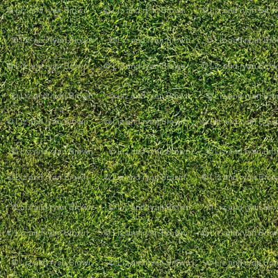 Endless Lawn