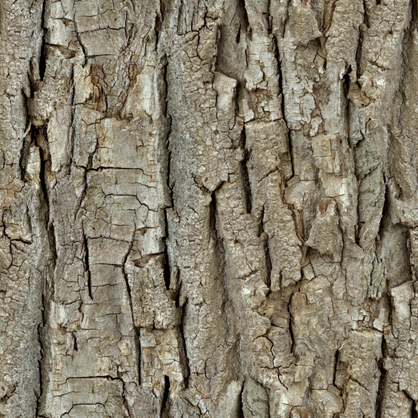 Endless Bark  fabric by thinlinetextiles on Spoonflower - custom fabric