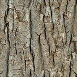 Rendless_bark_shop_thumb