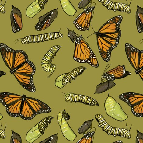 Rrmonarch_caterpillars_on_olive_shop_preview