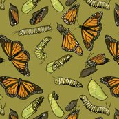 Rrmonarch_caterpillars_on_olive_shop_thumb