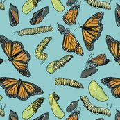Rrmonarch_caterpillars_on_light_blue_shop_thumb