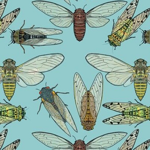 Cicadas on Light Blue