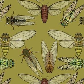 Cicadas on Olive Green
