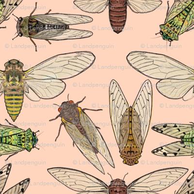 Cicadas on Pink