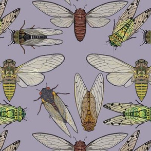 Cicadas on Light Purple