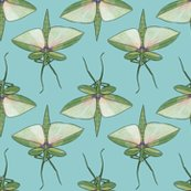 Rrstick_insect_on_light_blue_shop_thumb