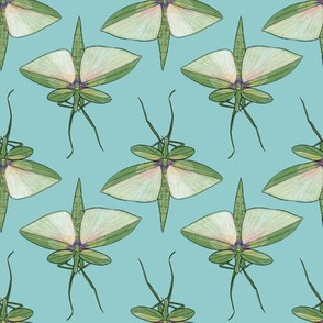 Stick Insects on Light Blue