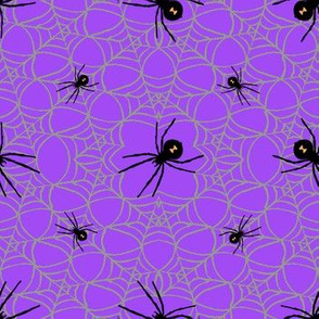 Spider_on_web