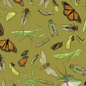 All the Insects on Olive Green
