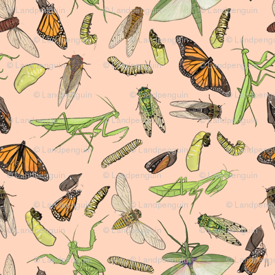 All the Insects on Light Pink