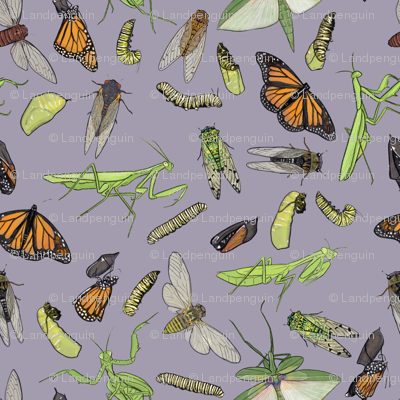 All the Insects on Light Purple