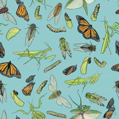 All the Insects on Light Blue