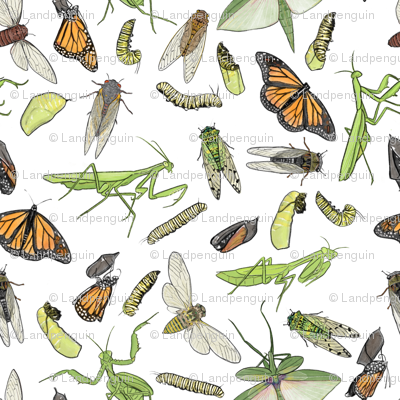 All the Insects