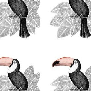 Toucan Minimel 1