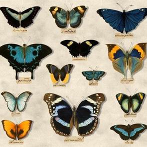 Lepidoptertist