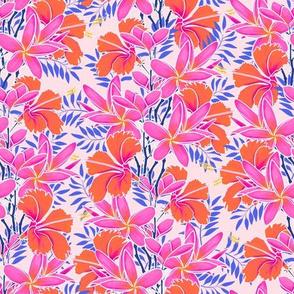 Pinky Plumerias