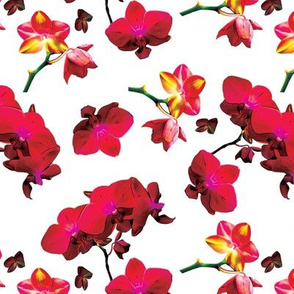 Red Orchids on White Upholstery Fabric