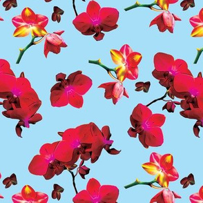 Red Orchids on Light Blue Upholstery Fabric