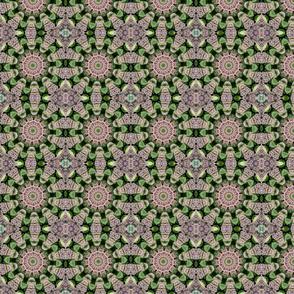Multi Sedum Pinwheels 2367