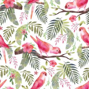 Parrots Pink