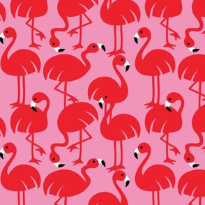 Gamme_Flamingos-01