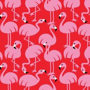 Gamme_Flamingos-02
