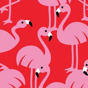 Gamme_Flamingos-09