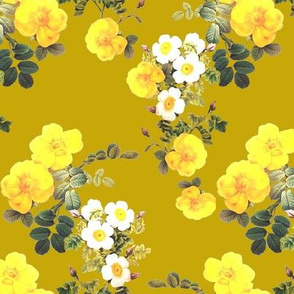 Yellow Rose // mustard yellow Redoute