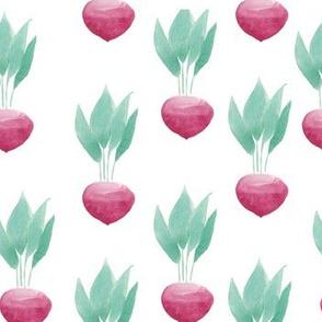 radish white