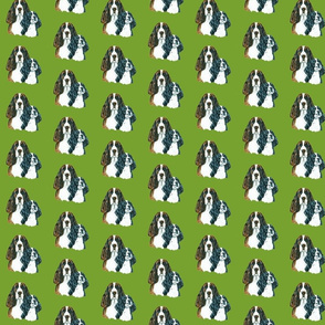 springer spaniels on green background