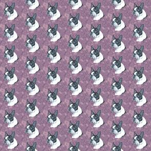 boston terrier head on purple marble