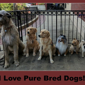 Pure Bred Dogs