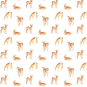 woodland fawns on white