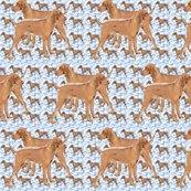 Rridgeback_blue_pattern_shop_thumb