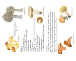 Rrwild_mushroom_chowder_thumb