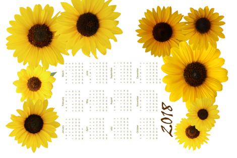 Kansas Sunflowers Tea Towel Calendar 2018 fabric by elizabethmay on Spoonflower - custom fabric
