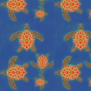 isaac_best_turtle