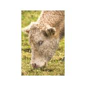 cow_pointilism