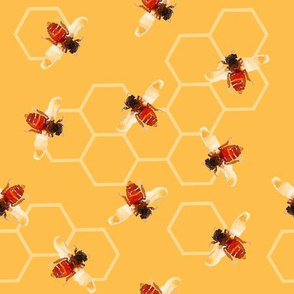 Worker Bees with Hexagon Honey
