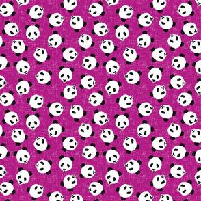 PandaScatterBerry