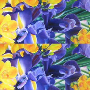 Irises & Freesias
