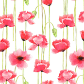 Watercolor Poppies_white