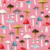 Pink Mushroom Study