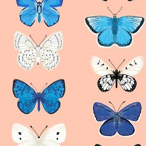 butterflies // pink and blue girls butterfly spring floral pastel