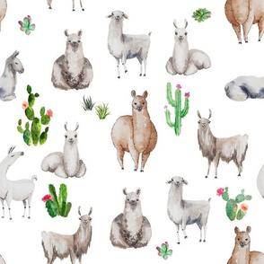 Bohemian Llama with Succulents