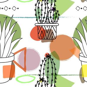 Aloe Cactus !