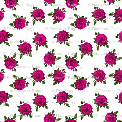 Roses Cerise on white