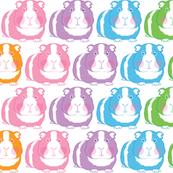 rainbow guinea-pigs