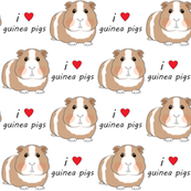 i love guinea pigs - brown